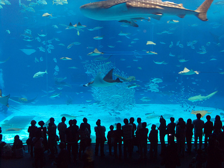 That was my dream Manila Ocean Park. By year 2050 or maybe 2070 this dream